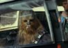 star wars the last jedi chewbacca porg rasato