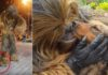 chewbacca e il cane randagio adottato