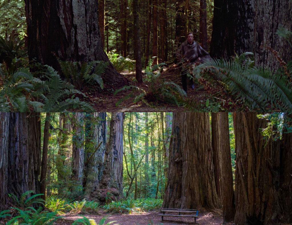California Red Tree Endor location